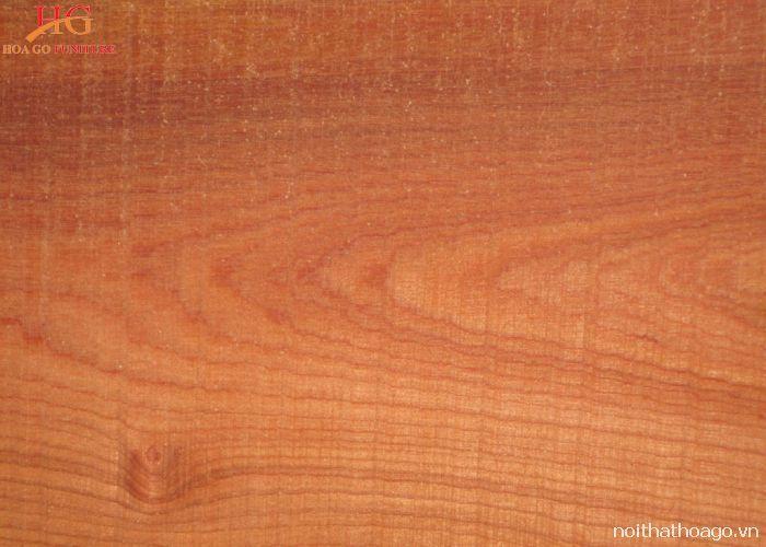 Đặc điểm của gỗ Xoan đào